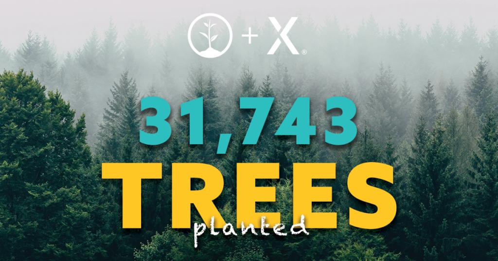 Istutimme 31743 puuta
